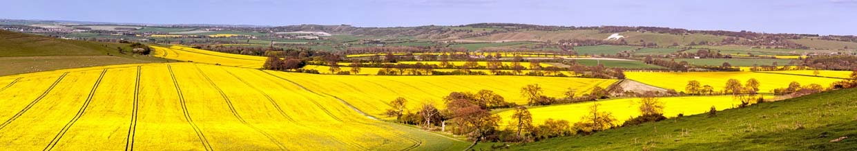 A panorame view of the Hertfordshire and Central Bedfordshire countryside in spring England